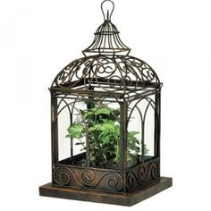 I've always been fascinated by bird cages, even had dreams with white wicker cages over and over again.  Cages turned into terrariums are especially endearing.
