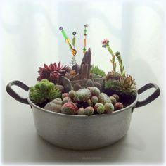 schöne dekoideen hauswurz attraktive pflanzen … | hauswurz, Gartenarbeit