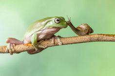 L'inchino della rana per far salire la lumaca in testa