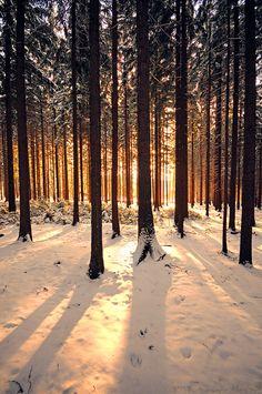 Afternoon Glow by r3novatio.deviantart.com on @deviantART