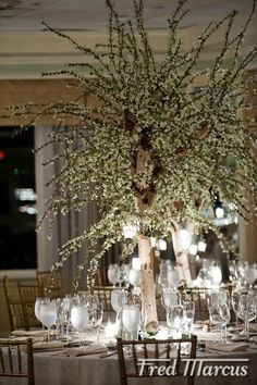15 best weeping willow images weeping willow willow tree country rh pinterest com  weeping willow tree centerpieces