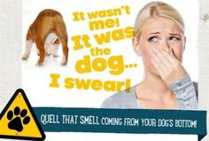 Gassy Dog? Check out these Gas-Busting Tips | Ruff Ideas