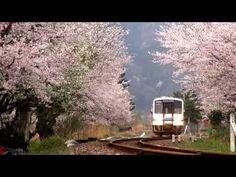 鉄道のある風景 JR三江線 花ある時期もあと僅か (Apr-2013) - YouTube