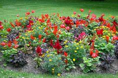Canteiros vivos. Jardins du Luxembourg, Paris