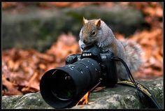 まるでカメラマンのようなポーズも、動物がカメラとたわむれている様子いろいろ - GIGAZINE