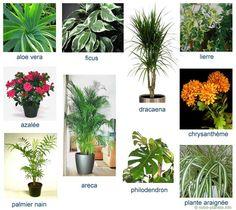 plantes intérieures dépolluantes