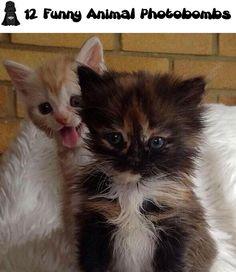 12 Funny Animal Photobombs