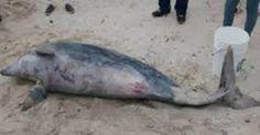 Investiguen la sorpresiva muerte de 23 delfines en las costas de Argentina FIRMA Y COMPARTE ESTA...