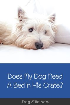 "Are you wondering ""does my dog need a bed in his crate?    ""You might if you've just started crate training your dog and don't know what to put in your puppy's crate.    Fortunately, I've got all the answers you need on how to make your dog's crate more comfortable. Best Puppies, Best Dogs, Dogs And Puppies, Crate Training, Training Your Dog, Cute Dog Collars, Emergency Vet, Puppy Food, Sleeping Dogs"