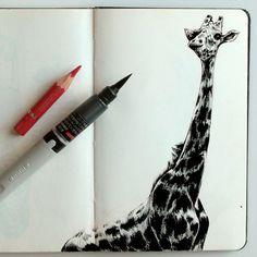 Croquis d'une girafe réalisé à la Grande Galerie de l'Evolution au Muséum national d'histoire naturelle à Paris