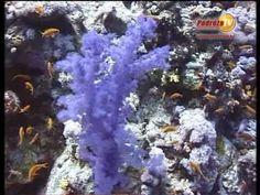 Podróże TV Egipt Zycie Rafy Koralowej