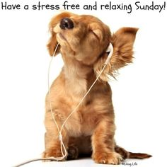 Have a relaxing Sunday!
