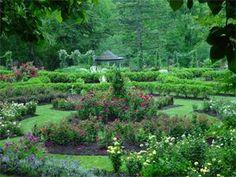 One of my favorite places: Morris Arboretum