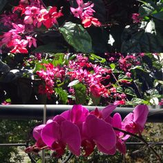 Primavera em Sampa