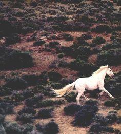 Δ Light in August Δ All The Pretty Horses, Beautiful Horses, Light In August, She Wolf, Horse Love, Gray Horse, White Horses, Horse Photography, Mustang