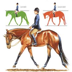 Excellent article on Hunters under Saddle. Self-carriage depends on the horse's training development, as well as his physical fitness. Jean illustration