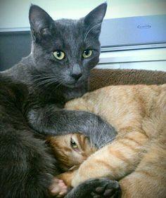 My little cats! #cats #love #gatos