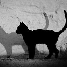 Black feline