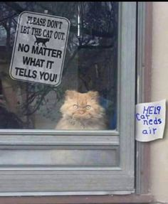 Funny Don't Let The Cat Out Sign