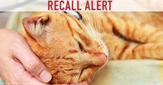 BREAKING NEWS: Six Types of Pet Food Recalled