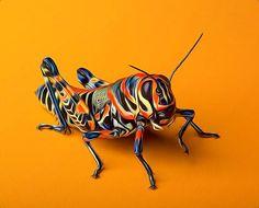 Photograph Rainbow Grasshopper by Bob Jensen on 500px