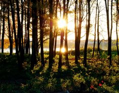 A Forest at Sundown Copyright: Stonislav Butygin ID 6631226 Dreamstime Stock Photo