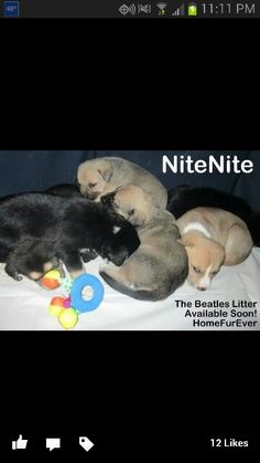 Beatles litter