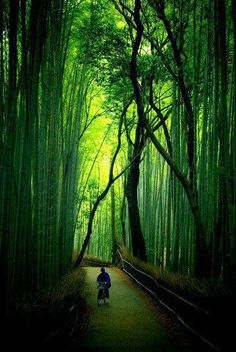The Bamboo Forest in Arashiyama, Kyoto, Japan