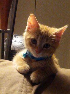 Meet 9 week old Pepsi! He is a happy, happy cat...in his new home!