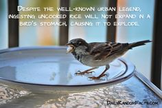 Some of the beautiful interesting facts abut animals with images   Beautiful Talks