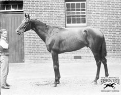His Majesty Sired 50 Stakes Winners Including Majesty's Prince, Mehmet, Country Pine, Tight Spot, And Pleasant Colony(Won 1981 Ky. Derby And Preakness). His Daughters Rayzana(Danehill) And Ribbon (Risen Star) Produced Two Of The Better Horses Of This Generation.
