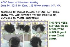 Tonight's List is Posted. There are Cats/Kittens in Danger   NYC AC&C Urgent Cats