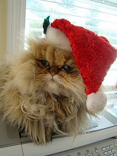 Festive Hats! the cure for bad hair dayz