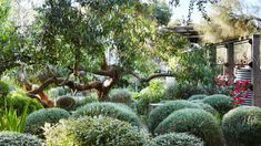 Peter Shaw · Sunnymeade - The Design Files Australian Garden Design, Australian Native Garden, Dry Garden, Green Garden, Coastal Gardens, The Design Files, Garden Landscape Design, Garden Spaces, Garden Inspiration
