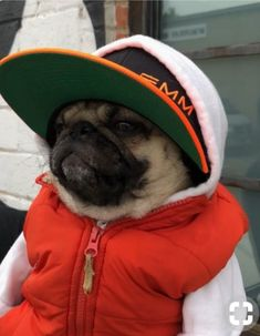 """Explore our web site for even more info on """"pug puppies"""". It is actually an outstanding place to find out more. Cute Little Animals, Cute Funny Animals, Funny Dogs, Cute Dogs And Puppies, Pet Dogs, Dog Cat, Black Pug Puppies, Doggies, Baby Pugs"""