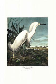 Global Gallery 'Snowy Heron or White Egret' by John James Audubon Framed Graphic Art Size: Painting Frames, Painting Prints, Art Prints, Bird Paintings, Nature Paintings, Artist Canvas, Canvas Art, Canvas Prints, Audubon Prints