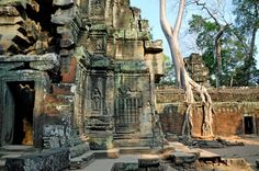 Amazing Places to Travel On Earth - ta prohm temple Angkor Wat