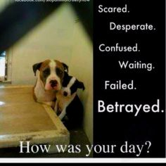My heart breaks for shelter dogs. :(