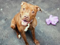 TO BE DESTROYED 04/17/15 – SUGAR – A1032388
