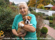 Continental Bulldog, Dogs, Animals, House Dog, Companion Dog, Bulldog Breeds, Tips, Animales, Animaux