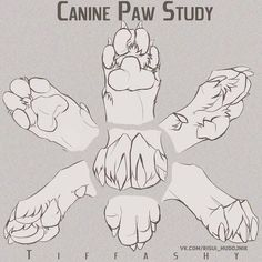 Canine Paw Study/Angles/Tutorial by TIFFASHY on DeviantArt OH WOW SUCH FEEDBACK! Thank you all! -Program that i use is always PhotoShop I did some Photo manipulation on my-self in the beginning. i hope you did learn a bit of enjoy my dea… Art Reference Poses, Design Reference, Drawing Reference, Animal Sketches, Animal Drawings, Drawing Sketches, Drawing Animals, Art Drawings, Dog Anatomy