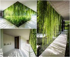 La oficina de arquitectura MIA Design Studio ha realizado un proyecto de salas de masajes en Da Nang (Vietnam) que tiene fachadas con jardines verticales.