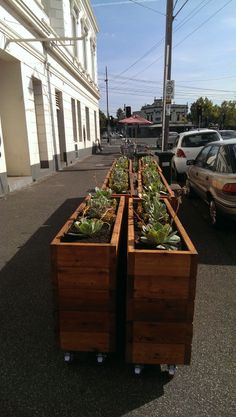 Succulents help achieve an Industrial look