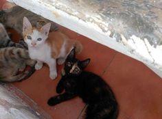 . Regalo estos preciosos gatitos. Los marrones son macho y el negrito es hembra…