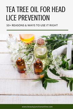 Discover how to use tea tree oil for head lice prevention!