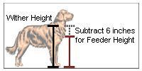 How to measure raised elevated dog bowls. Measure the wither height - from the ground to the top of your dog's shoulder. Then subtract 6 inches. This is the correct raised feeder height for your dog. (For small dogs subtract 4 inches.)