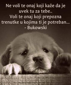 Words Quotes, Qoutes, Hugs And Kisses Quotes, Chicken Recepies, Beast Quotes, Motivational Quotes, Inspirational Quotes, Autumn Aesthetic, Serbian