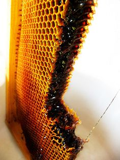 Bees are magic. Raw Honey is a super food. Sweet, antibacterial and healing. Enjoy, but leave some for the bees....