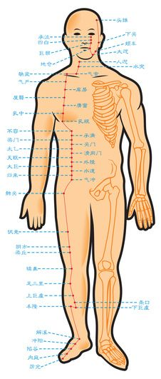 137 Best Meridians Images Massage Traditional Chinese Medicine