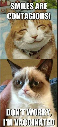 Grumpy cat smiles